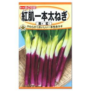 トーホク 紅肌一本太ねぎ 美紅(みく)赤ねぎ 種 生産地:栃木県 (家庭菜園 長ねぎ ネギのタネ 野菜 たね 種子)