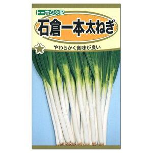トーホク 石倉一本太ねぎ 種(長ネギ 家庭菜園 ネギのタネ 野菜 たね 種子)