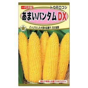 トーホク あまいバンタムDX トウモロコシ 種 中生種(家庭菜園・とうもろこしのタネ たね 種子 夏野菜)