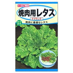 トーホク 焼肉用レタス チマサンチ 種(家庭菜園 カキチシャ レタスのタネ 野菜 たね)