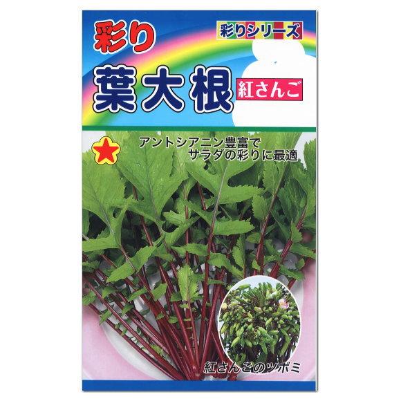 トーホク 彩り葉大根 紅さんご 種  プランター栽培もできます! (家庭菜園 簡単 野菜 たね 種子 葉だいこんのタネ)
