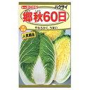 トーホク 郷秋60日 白菜  種(家庭菜園・白菜・はくさい ハクサイのタネ たね 種子)