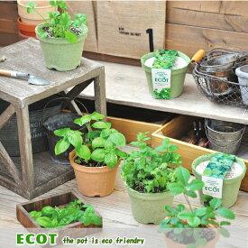 「エコットS」地球にやさしいエコポットで育てる ハーブ栽培キット 選べる5種類!ミント、バジル、ラベンダー、ワイルドストロベリー、パクチー(インテリアグリーン おしゃれ かわいい 栽培セット ガーデニング 家庭菜園 )