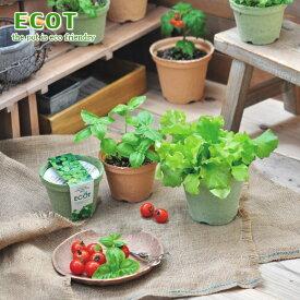「エコットM」 地球にやさしいエコポットで育てる 野菜栽培キット 選べる6種類!レタス、ミニニンジン、ラディッシュ、青ジソ、ミニトマト サラダホウレンソウなど(インテリアグリーン・おしゃれ・かわいい野菜栽培セット・家庭菜園・お家で育てるサラダ )