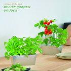 新製品!デリッシュガーデンダブルブリキポットでミニトマトやハーブを育てる栽培キット(インテリアグリーン・おしゃれ・かわいい栽培セット・ガーデニング・家庭菜園)