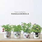新製品!ハナ&アニマルズ(おしゃれかわいい栽培セットガーデニングおしゃれインテリアグリーン)
