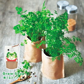 育てるスープ ペーパーバッグで野菜を育てる栽培キット(インテリアグリーン おしゃれ かわいい 栽培セット ハーブ 家庭菜園)