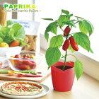 PAPRIKAミニパプリカ栽培セット(インテリアグリーンおしゃれかわいい野菜栽培セットお洒落キット母の日)