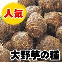 大野芋 里芋 サトイモ 種芋 イモ好きをうならせる衝撃の食感 1kg【2018年予約受付中】