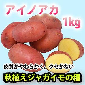 アイノアカ じゃがいも ジャガイモ 種芋 1kg【充填時】【8月よりお届け予定】【他の商品との同梱不可】
