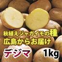 出島(デジマ でじま) ジャガイモ 種芋 1kg【充填時】【残りわずか】【植付けに最適なS・Mサイズ混合】