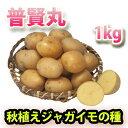 普賢丸(フゲンマル) じゃがいも ジャガイモ 種芋 1kg【充填時】