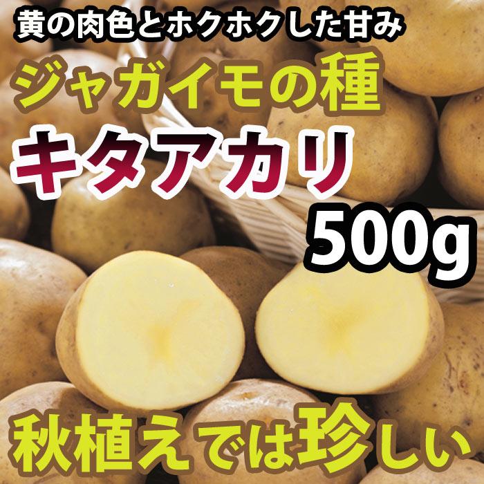 キタアカリ(北あかり) ジャガイモ 種芋 500g【充填時】【8から9月より入荷次第お届け予定】【珍しい】