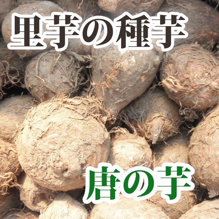 里芋の種芋 【 唐の芋 】 種 1kg【2018年予約受付中】