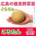 野菜苗 メロン ころたん 1POT【予約苗】【納期指定不可】