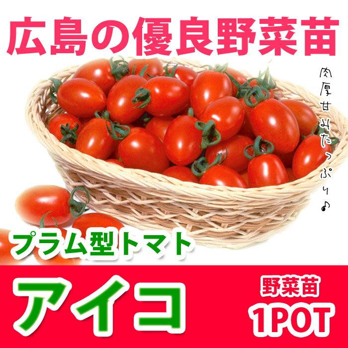 野菜苗 ミニトマト アイコ 実生苗 1POT【販売期間終了間近!】【納期指定不可】