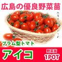 野菜苗 ミニトマト アイコ 接木苗 1POT【予約苗】【納期指定不可】