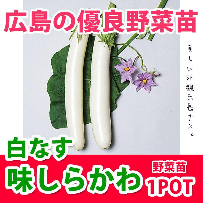 野菜苗 ナス 白ナス 実生苗 味しらかわ 1POT【販売期間終了間近!】【納期指定不可】
