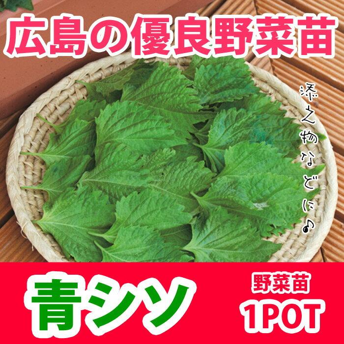 野菜苗 シソ オオバ 大葉 苗 販売 1POT【販売期間終了間近!】【納期指定不可】