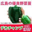 野菜苗 ピーマン ジャンボピーマン デカチャンプ 苗 1POT【予約苗】【納期指定不可】