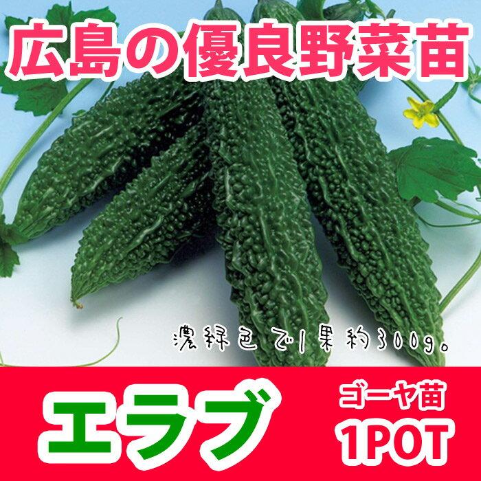 野菜苗 ゴーヤ ニガウリ エラブ 苗 1POT【販売期間終了間近!】【納期指定不可】