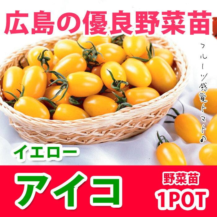 野菜苗 ミニトマト 黄色いアイコ 実生苗 1POT【販売期間終了間近!】【納期指定不可】