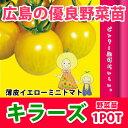 野菜苗 トマト キラーズ 苗 1POT【2018年予約苗】【納期指定不可】