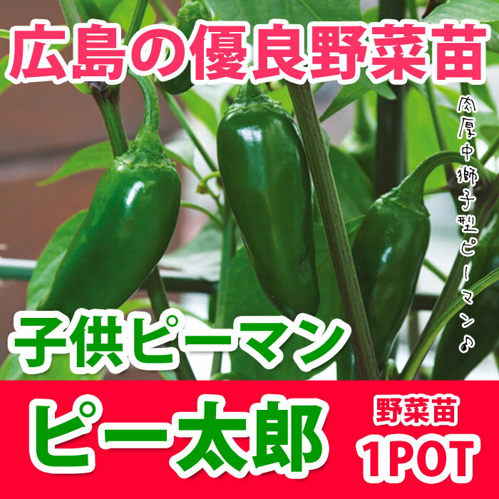 野菜苗 ピーマン ピー太郎 苗 1POT【販売期間終了間近!】【納期指定不可】