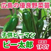 野菜苗ピーマンピー太郎苗