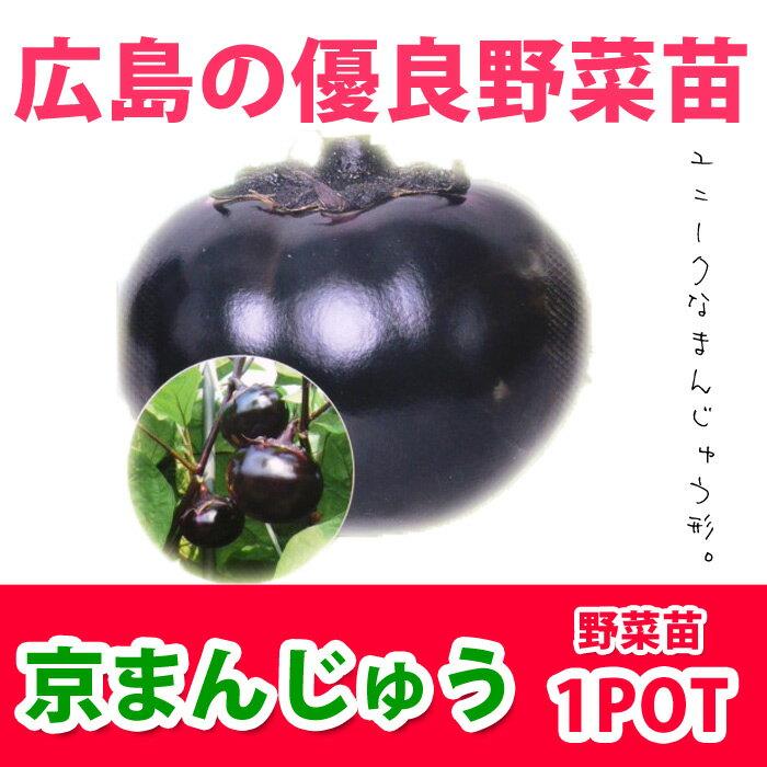 野菜苗 ナス 京まんじゅう 苗 1POT【販売期間終了間近!】【納期指定不可】