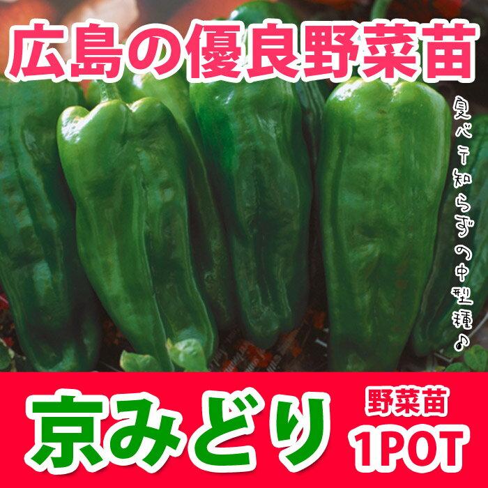 野菜苗 ピーマン 京みどり 実生 1POT【販売期間終了間近!】【納期指定不可】