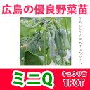 野菜苗 キュウリ ミニQ 実生 1POT【予約苗】【納期指定不可】