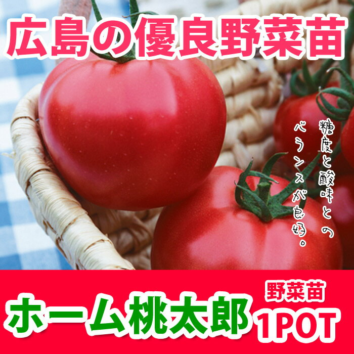 野菜苗 トマト ホーム桃太郎EX 実生苗 1POT【販売期間終了間近!】【納期指定不可】