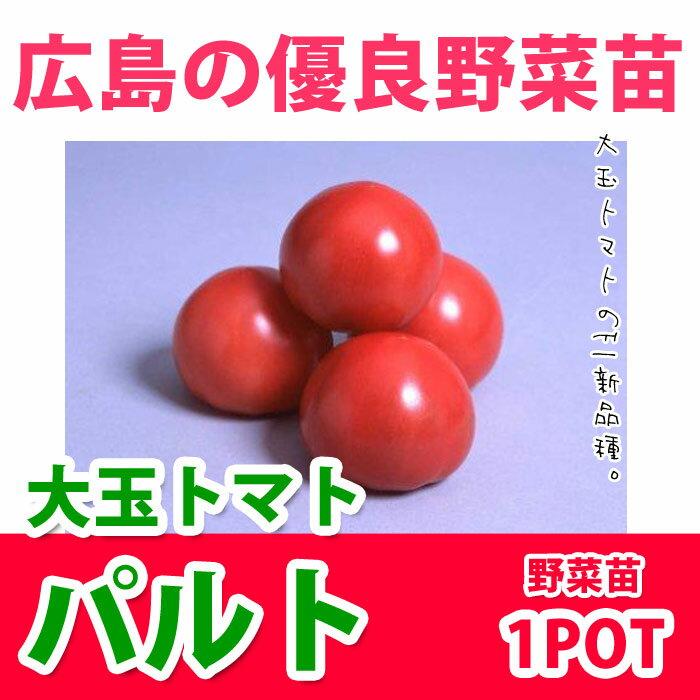 野菜苗 トマト パルト 実生苗 1POT【販売期間終了間近!】【納期指定不可】