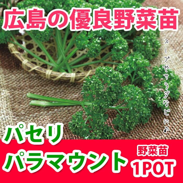 野菜苗 パセリ パラマウント 苗 1POT【販売期間終了間近!】【納期指定不可】