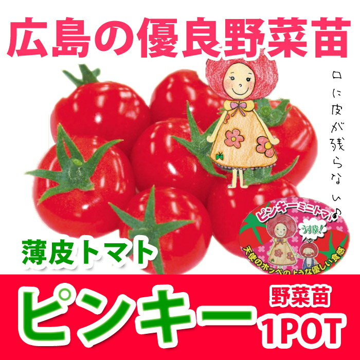 野菜苗 ミニトマト ピンキー実生苗 1POT【販売期間終了間近!】【納期指定不可】