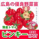 野菜苗 ミニトマト ピンキー実生苗 1POT【予約苗】【納期指定不可】