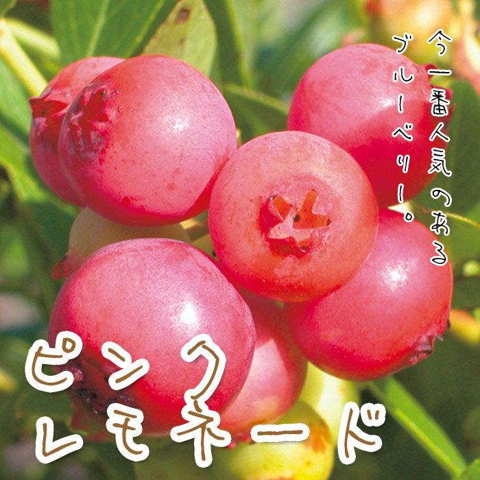 ブルーベリー・ピンクレモネード【新品種】【珍しい植木】【おすすめ】
