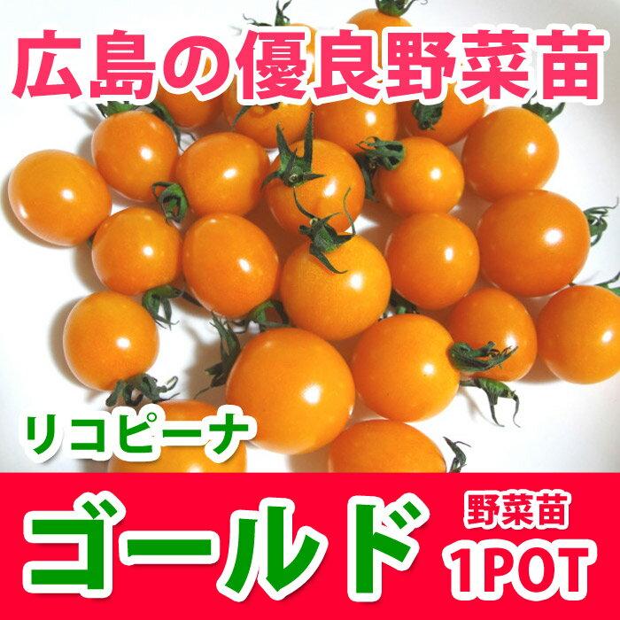 野菜苗 ミニトマトリコピーナゴールド 苗 1POT【販売期間終了間近!】【納期指定不可】