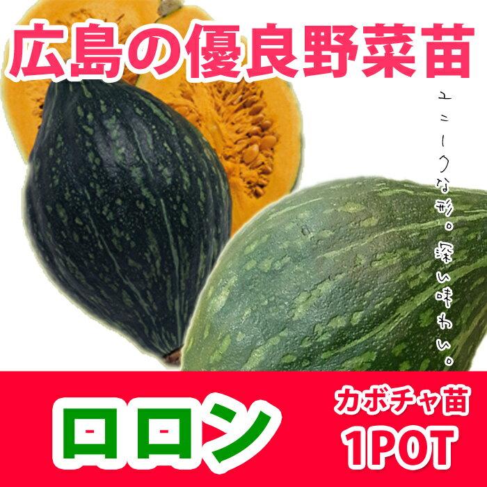 野菜苗 カボチャ ロロン 苗 1POT【販売期間終了間近!】【納期指定不可】