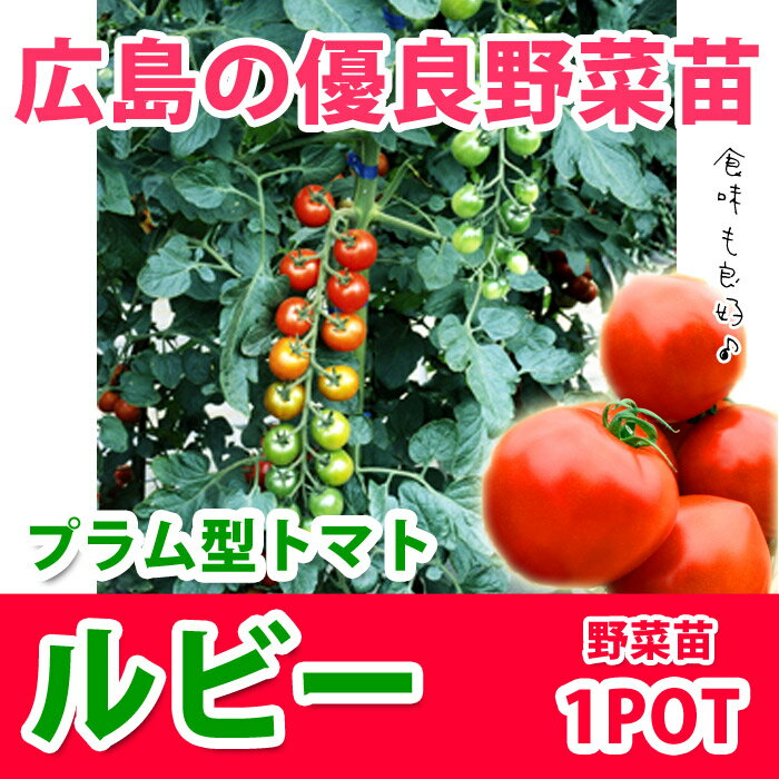野菜苗 ミニトマト ルビー 実生苗 1POT【販売期間終了間近!】【納期指定不可】
