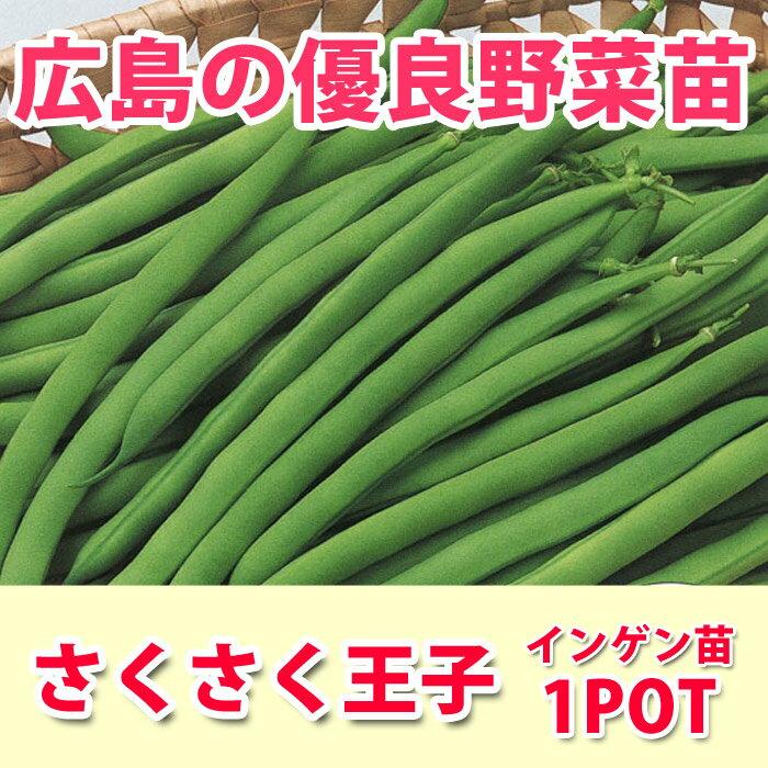 野菜苗 インゲン サクサク王子 苗 1POT【販売期間終了間近!】【納期指定不可】