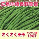 野菜苗 インゲン サクサク王子 苗 1POT【予約苗】【納期指定不可】