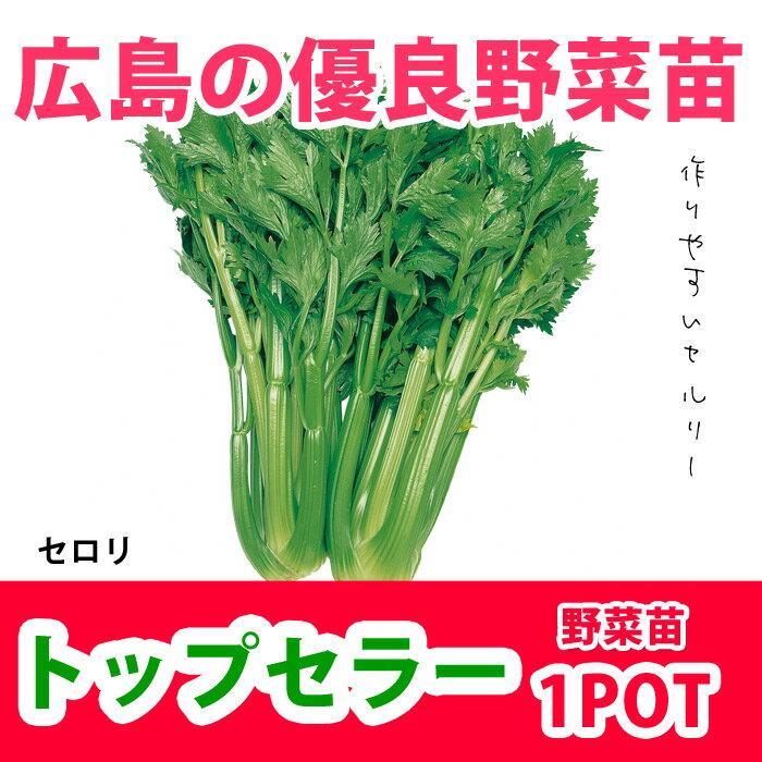 野菜苗 セロリー トップセラー 苗 1POT【販売期間終了間近!】【納期指定不可】