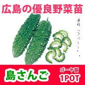 野菜苗ゴーヤニガウリ島さんご