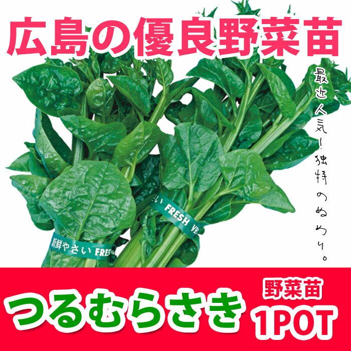 野菜苗 つるむらさき ツルムラサキ 実生苗 1POT【販売期間終了間近!】【納期指定不可】