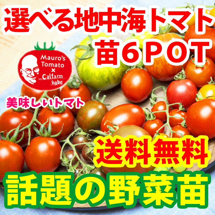 野菜苗 6種類から選べる地中海トマトの苗 お試し3品種 【送料無料】【沖縄・北海度発送不可】