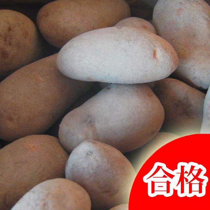 メークイン 種芋 ジャガイモ じゃがいもの種 10kg【検査合格済】【サイズ混合】【春植えジャガイモ】