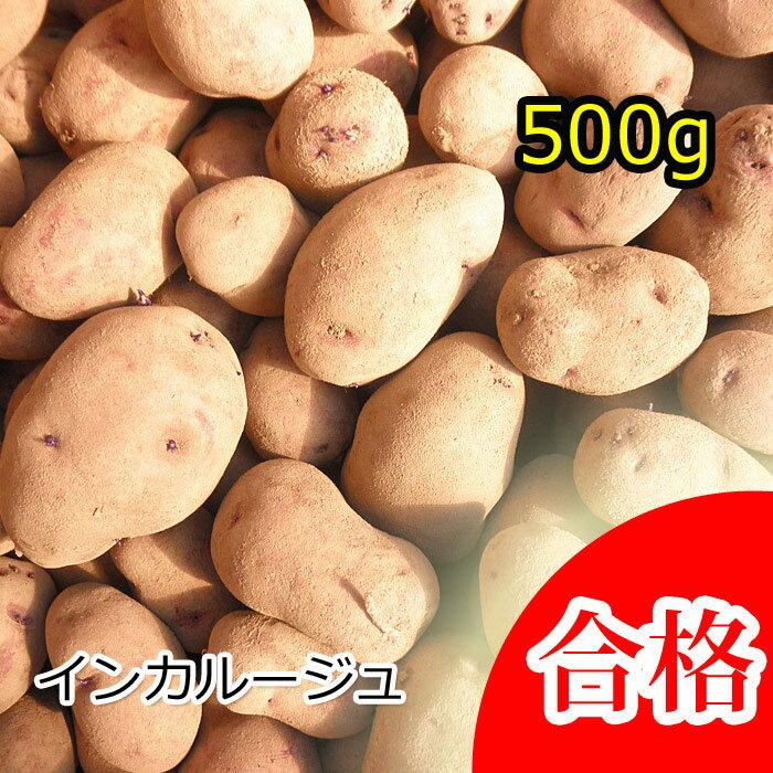 【種芋】ジャガイモ じゃがいもの種500g【インカルージュ】【検査合格済】【サイズ混合】