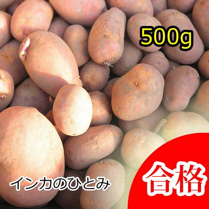 【種芋】ジャガイモ じゃがいもの種 500g【インカのひとみ】【検査合格済】【サイズ混合】【予約受付中】